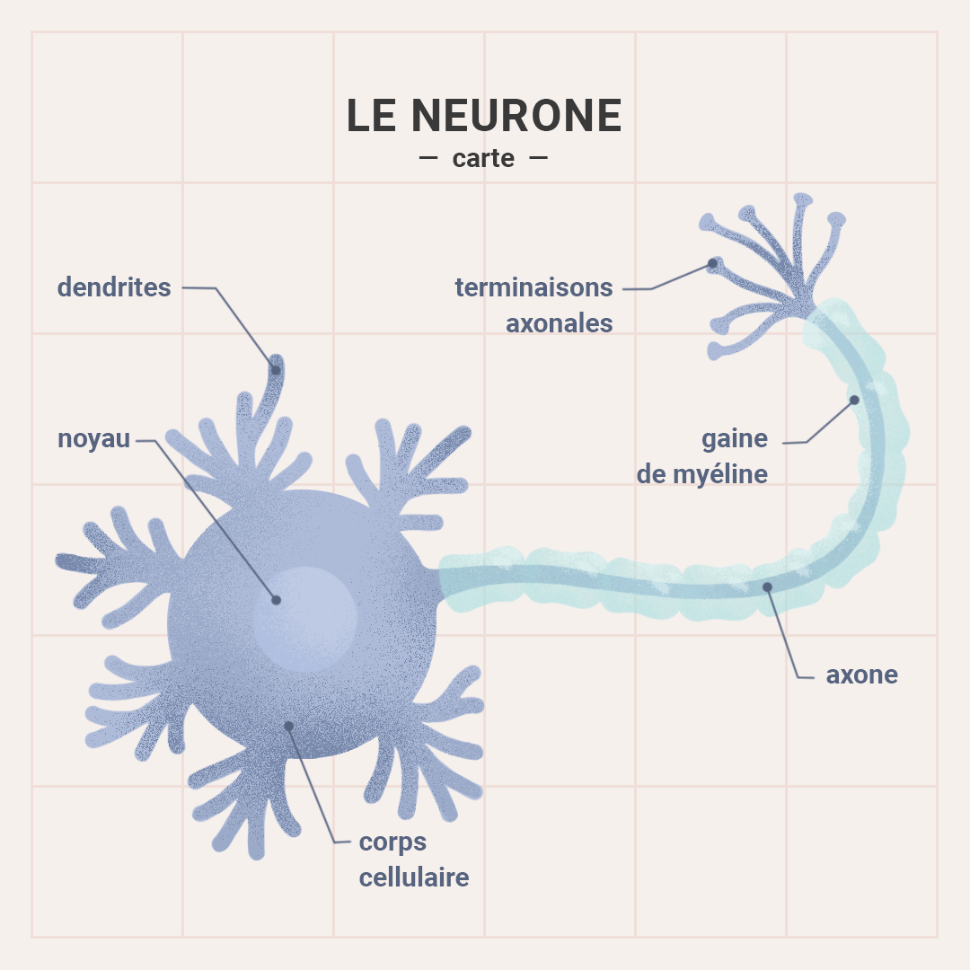 Map - neurone