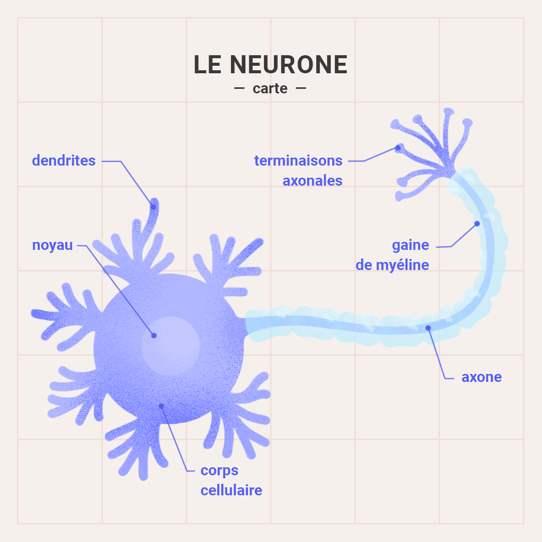 Carte Neurone
